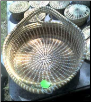 VERY LARGE ROUND SWEETGRASS BREAD BASKET